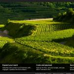 Bing Ads thumbnail image